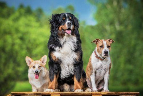 Pet Wellness – Pet Stress Awareness