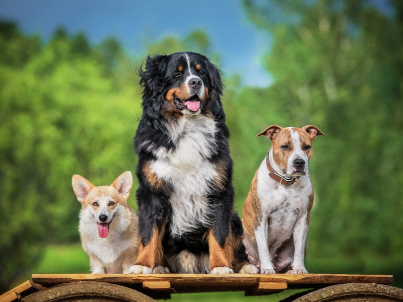 Pet Wellness – Pet Stress Awareness